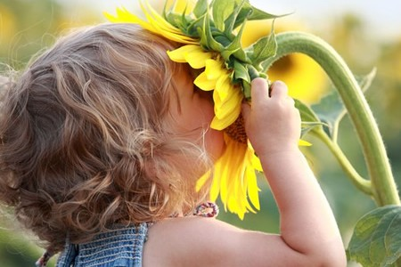 sunflowers-garden-child11-450x300[1]